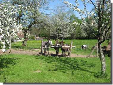 Nos ânes Camping La Broche